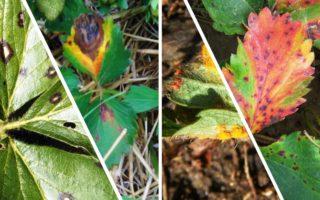 Распространенные болезни растений в саду