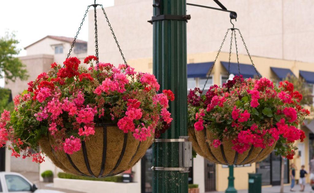 подвесные цветы в горшках